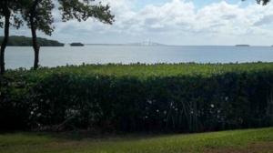 mangrove trimming